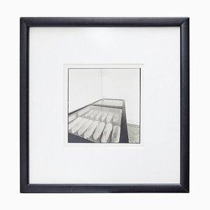 Conills de Mendel Photography by Joan Fontcuberta
