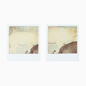 Miquel Arnal, Polaroid Fotografien, 4er Set
