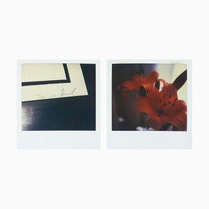 Set Polaroid Fotografien von Miquel Arnal