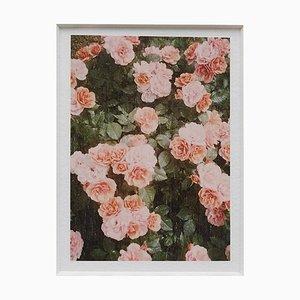 David Urbano the Rose Garden Nr. 21
