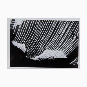 Enrico Garzaro, Flora Photogram, Black and White Photograph