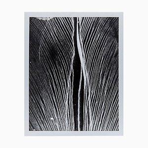Enrico Garzaro, Black and White Photography, Flora Photogram
