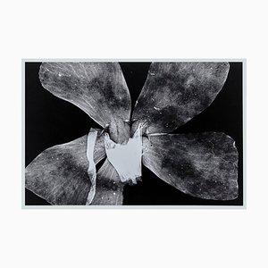 Enrico Garzaro, Flora Fotogramm, Schwarzweiß Fotografie