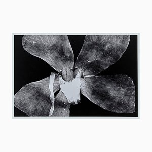 Enrico Garzaro, Flora Photogram, Photographie Noir et Blanc