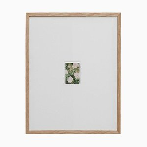 Contemporary Photography the Rose Garden Nr. 35 von David Urbano