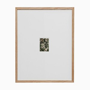 Contemporary Color Limited Edition Photography the Rose Garden N44 by David Urbano