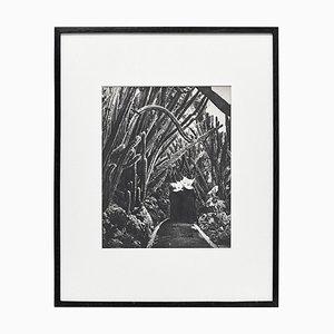 Fotoincisione Brassaï, in bianco e nero, 1979