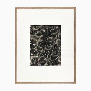Fotoincisione di fiori bianchi e neri di Karl Blossfeldt, 1942