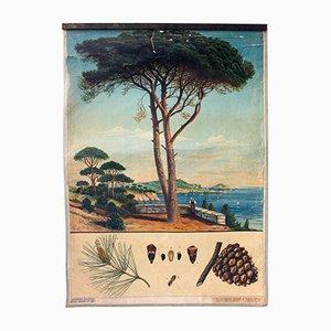 Póster antiguo sobre el pino