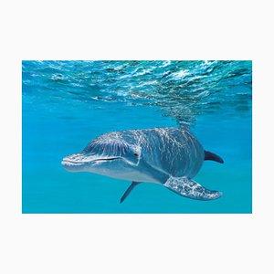 Patrick Chevailler, 536 Dolphin y superficie, 2021