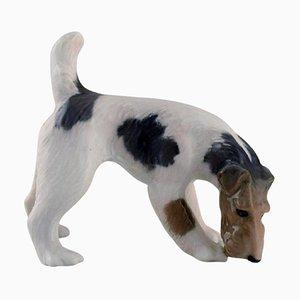 Figurine Royal Copenhagen en Porcelaine, Fox Terrier, Datée 1889 - 1922