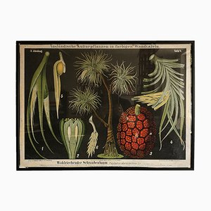 Poster botanico, anni '50