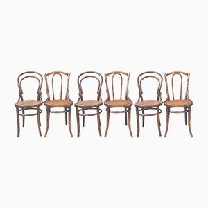 Bistro Wooden Curved Chairs, Set of 6
