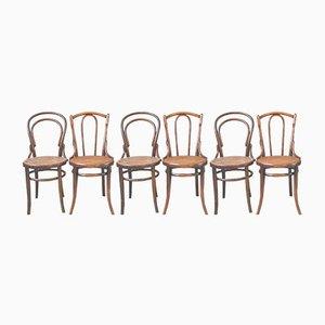 Geschwungene Bistro Holzstühle, 6er Set