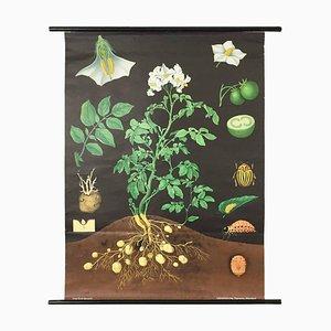 Tableau de Biologie Botanique Allemagne de l'Ouest de Hagemann, Allemagne, 1960s