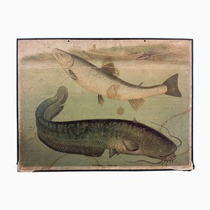 Stampa di una trota e di un pesce gatto di Friedrich Specht per F. E. Wachsmuth, 1878