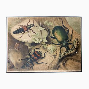 Póster con escarabajo de Friedrich Specht para F. E. Wachsmuth, 1878