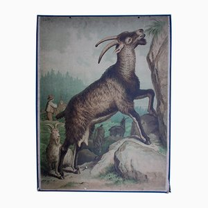 Austrian Goat Wallchart by Friedrich Specht for F. E. Wachsmuth, 1878