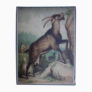 Póster con cabra austriaco de Friedrich Specht para F. E. Wachsmuth, 1878