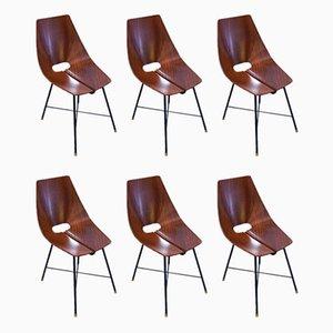 Stühle von Società Compensati Curvati, 1950er, 6er Set