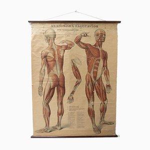 Schwedischer Vintage Anatomischer Medizinischer Wandbehang