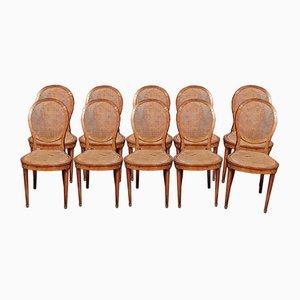 Sillas estilo Luis XVI de madera nudosa, década de 1800. Juego de 10