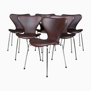 Modell Syveren 3107 Esszimmerstuhl aus Mokka Anilinleder von Arne Jacobsen für Fritz Hansen