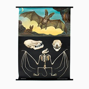 Vintage Wall Chart Bat by Jung, Koch and Quentell, 1969