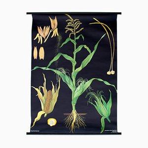 Vintage Wall Chart Corn, 1967