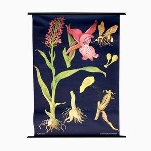 Affiche Murale avec Illustration Florale par Jung, Koch & Quentell pour Hagemann, Autriche, 1968