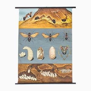 Stampa di formiche di Jung Koch Quentell, Austria, 1970