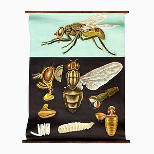 Póster con mosca austriaco de Jung Koch Quentell, 1967