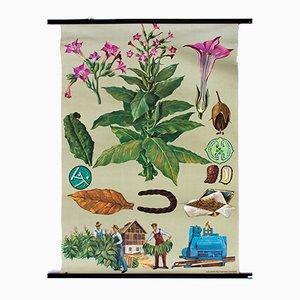 Affiche Murale Vintage Tabac par Jung, Koch et Quentell, 1964