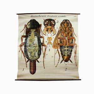 Póster de escarabajo de Paul Pfurtscheller, años 20