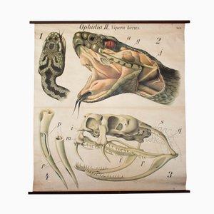 Póster sobre la víbora de Paul Pfurtscheller, 1926