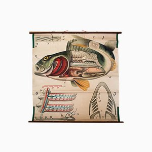 Stampa vintage raffigurante un pesce persico di Paul Pfurtscheller, 1913