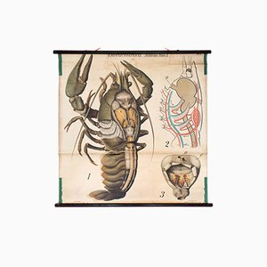 Stampa vintage raffigurante un'aragosta di Paul Pfurtscheller, 1909