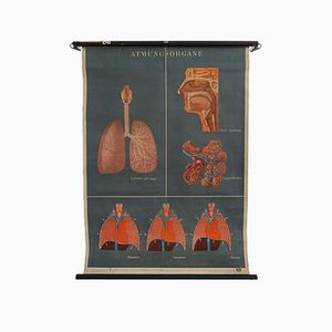 Affiche Vintage du Système Respiratoire, Allemagne, 1948