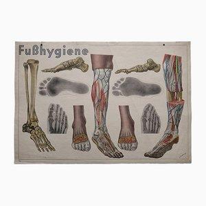 Cartellone con anatomia del piede di L. Schrott per Hofmanndruck