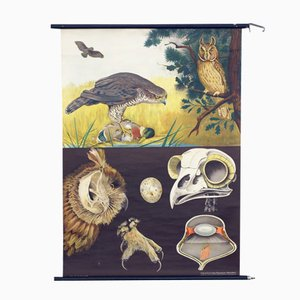 Vintage Birds of Prey Educational Chart from Hagemann