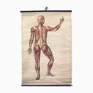 Póster de pared italiano sobre anatomía