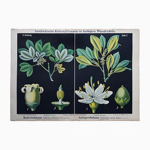 Antique German Wall Chart of a Rubber Tree and a Guttapercha Plant, 1880s