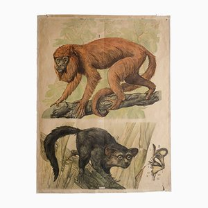 Antique Engleder Monkeys Wall Chart, 1890s