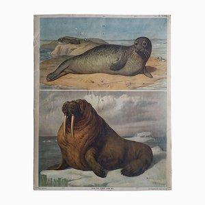 Póster austriaco antiguo con morsa y foca