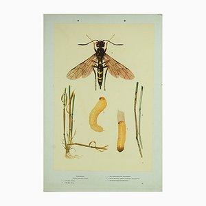 Affiche d'Ecole Récolte Vintage