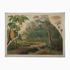 Antique German Wall Chart of a Cocoa Plantation by Goering & Schmidt for F.E. Wachsmuth