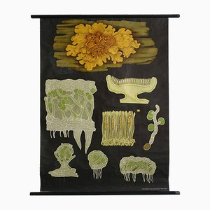 Vintage German Yellow Lichen Botanical Wall Chart by Koch, Quentell, and Jung, 1969