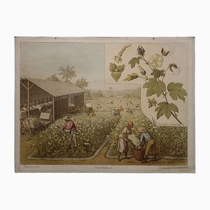 Stampa antica raffigurante piantagioni di cotone di Goering-Schmidt