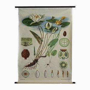 Vintage Teichrose Poster von Jung-Koch-Quentell