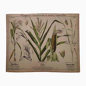 Antique Millet, Corn, & Rice Wall Chart, 1870s